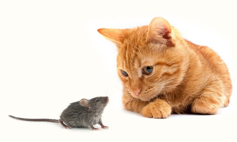 Do Cats Keep Mice Away?