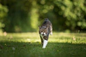 Do Cats Kill Scorpions?