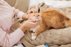 Do Cats Recognize Faces