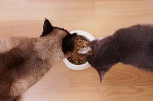 How Long Does It Take For A Cat To Digest Food?