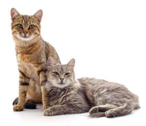 Should I Let My Cats Fight?