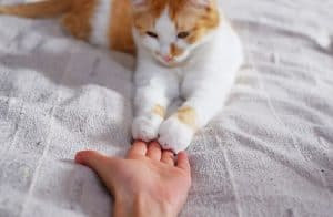 Why Do Cats Shake Their Paws