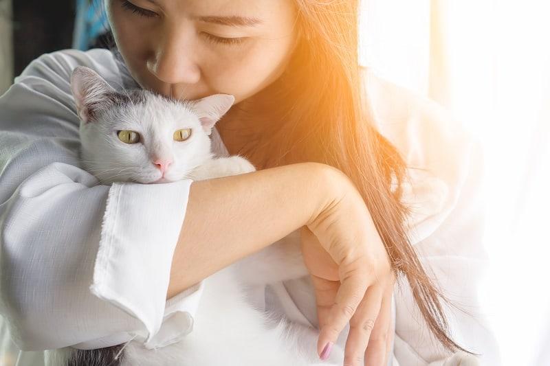 Can Cats Sense Sadness