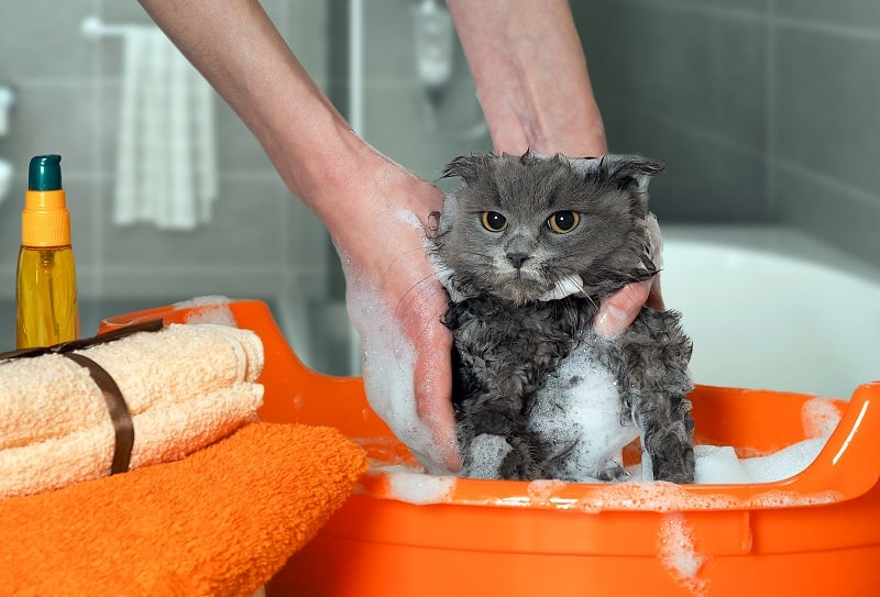Can You Use Dog Shampoo on Cats