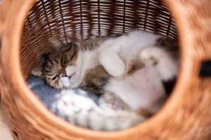 Cat Sleep Cycle