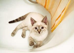 Cats Pooping In Bathtub