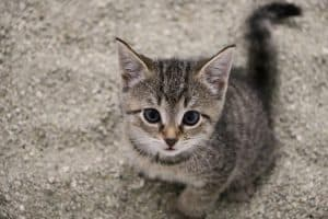 Constipated Kitten Triangle Method
