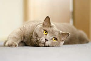 Do Cats Get Lonely Without Another Cat?