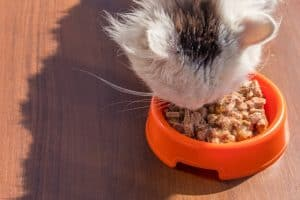 How Much Wet Food Should A Five-Week Old Kitten Eat