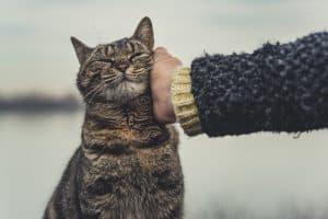 How To Calm A Hyper Cat?