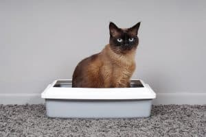 How To Neutralize Ammonia in Cat Litters