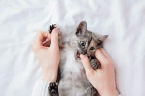 Why does my cat nip me?