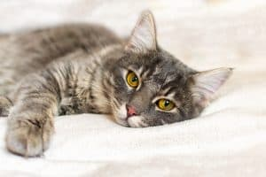 Will Neutering Stop Aggression in Cats