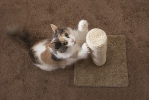 Best Cat Scratching Post To File Nails