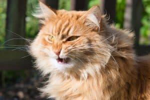 Broken Cat Whiskers Symptoms