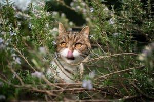 Do Cats Like Rosemary