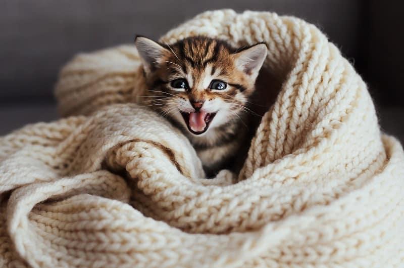 Fabrics That Cats Hate