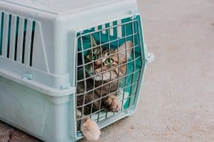 How Big Should A Cat Carrier Be