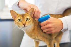 How Can You Tell If A Cat Is Microchipped?