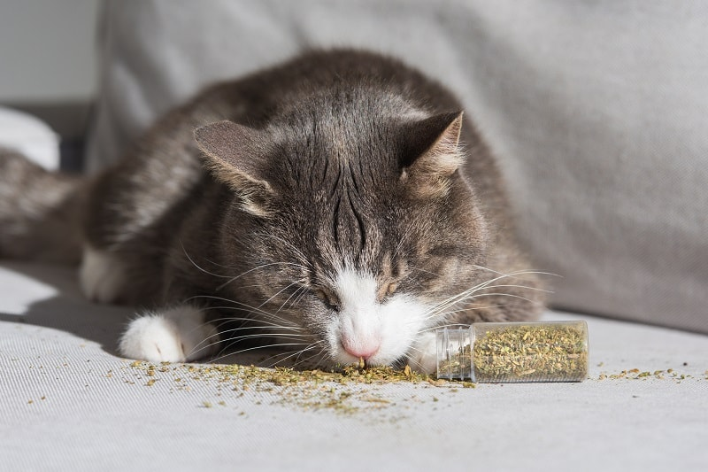 How Long Does Catnip Last