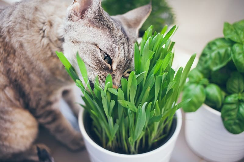 How To Keep Cat Grass Alive