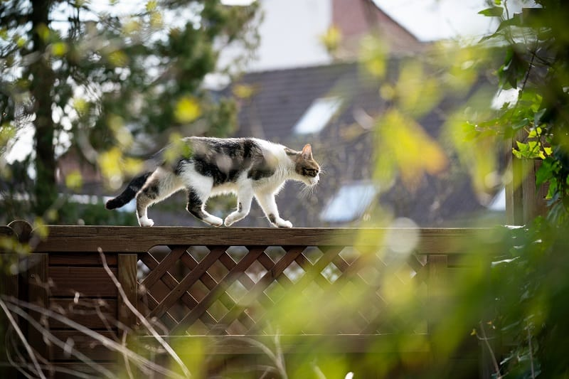 How to stop cats walking on a fence