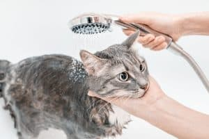 What Can I Wash My Cat With