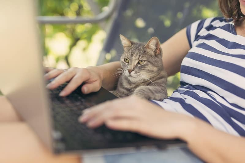 Being a cat lover could mean you have higher intelligence compared to dog lovers.