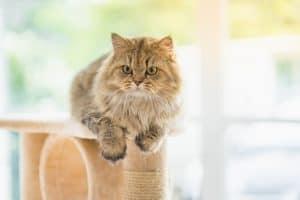 Cat Ate Plastic Wrapper