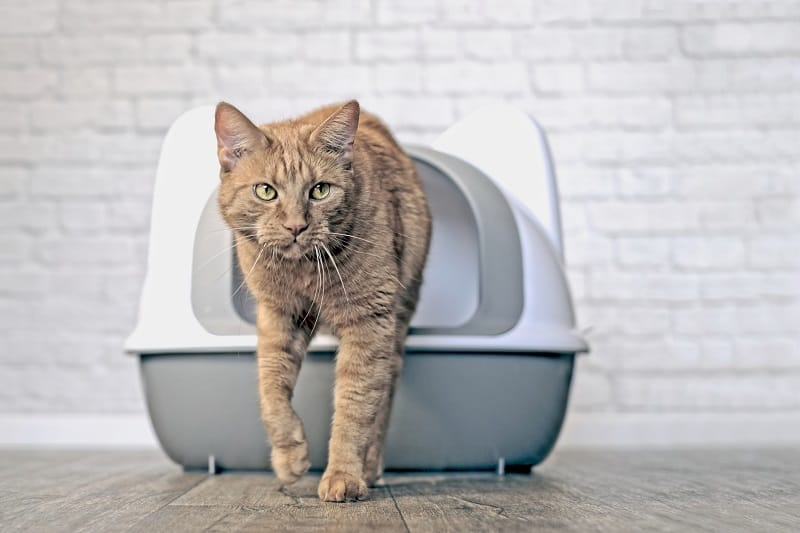 Cats are low-maintenance compared to dogs.