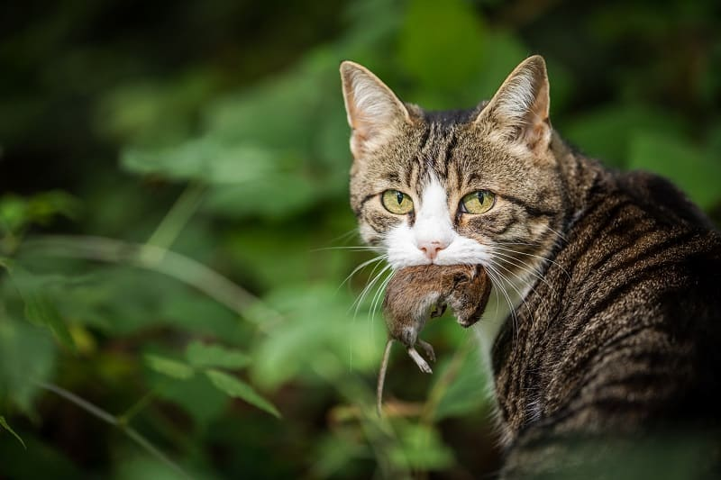 Cats keep your home free from rodents and pests.