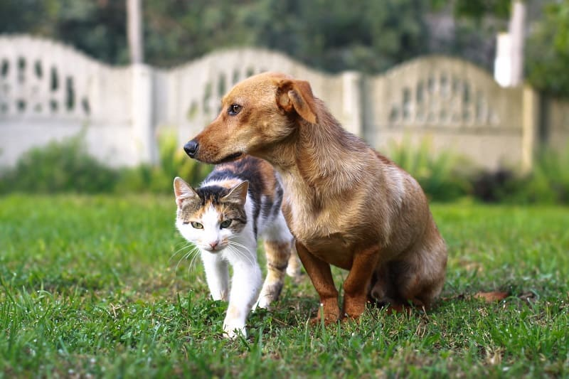 17 Reasons Why Cats Are Better Than Dogs