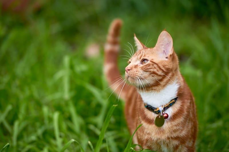 Do Outdoor Cats Need A Litter Box?
