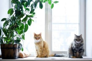 How Long To Keep Cats Separated After Deworming