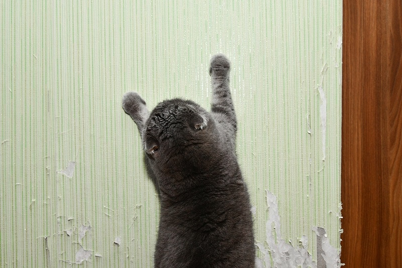 How To Stop Cats From Scratching Walls