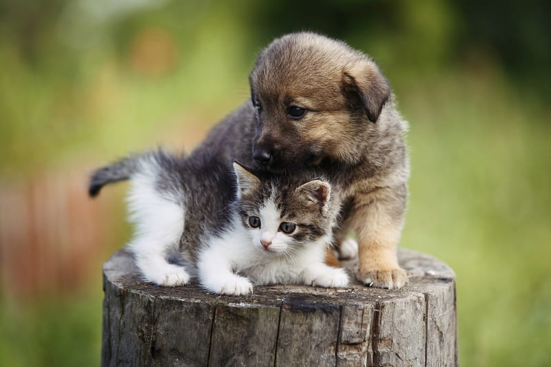 Kittens are easier to care for compared to puppies.