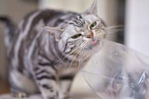 Why Do Cats Like Plastic Bags?