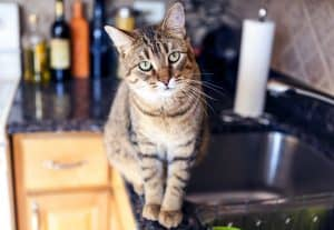 How to Keep Cat Off Counters With Foil?