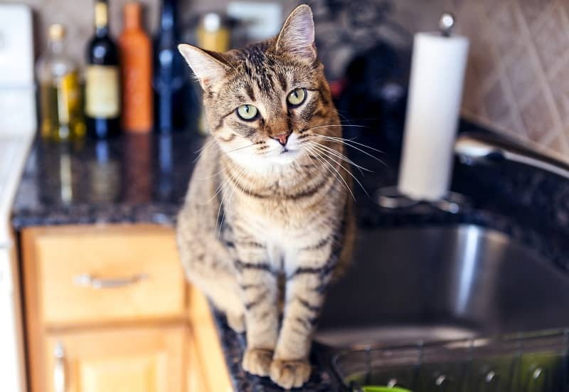 how to keep cat off counters with foil
