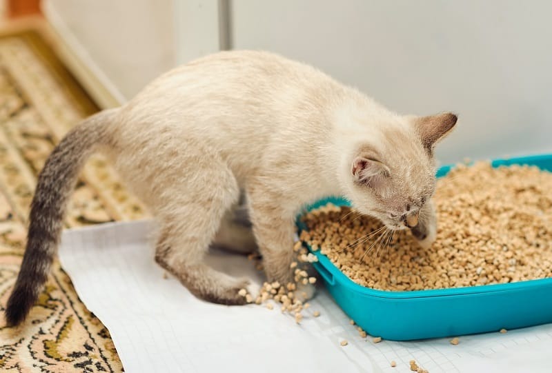 Cat Digs Excessively In Litter Box