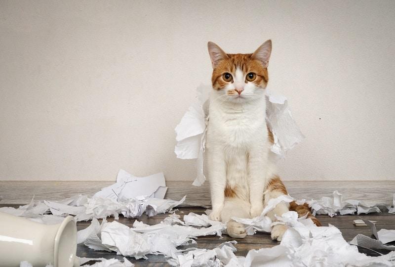 Cat Scratching Paper