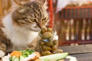 Why Do Cats Like Olives