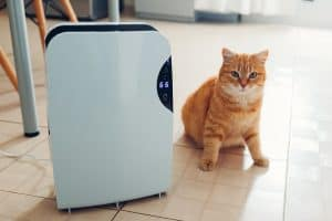 Are Humidifiers Safe for Cats