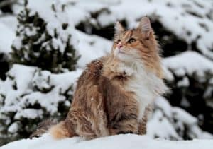 Can A Cat Freeze to Death