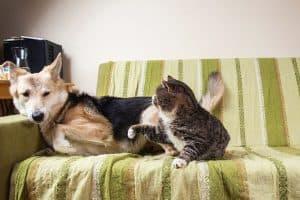 Cat Attacks Dog Unprovoked