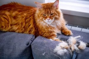 Cat Losing Clumps Of Hair