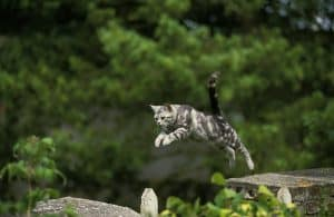 How Can Cats Jump So High