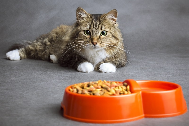 How Can I Get My Cat To Eat Dry Food