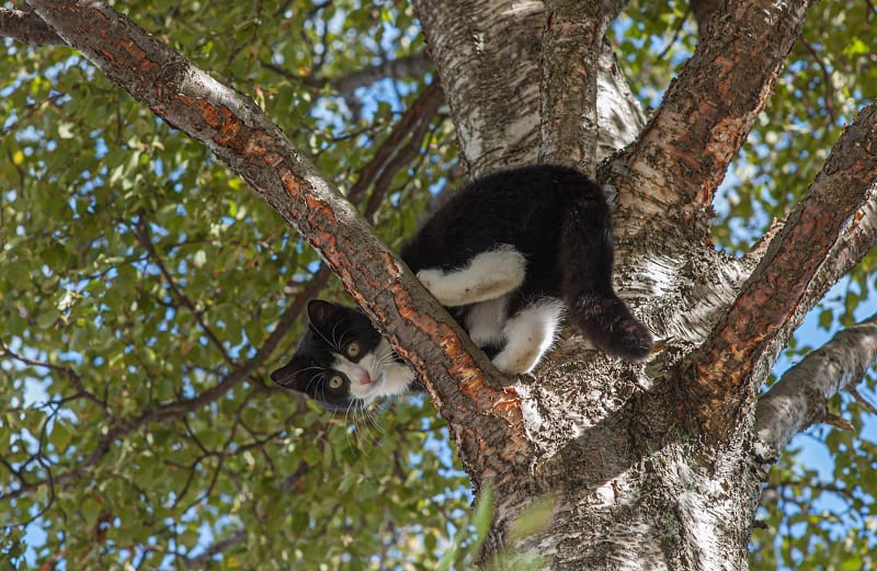 How Much Does It Cost To Get A Cat Out of A Tree?