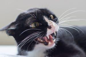 Kitten Food Aggression